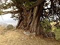 Mesolouri 510 32, Greece - panoramio (28).jpg