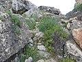 Mgarr, Malta - panoramio (121).jpg