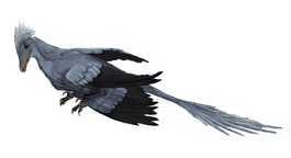 Archaeopteryx Facts about the Transitional Fossil
