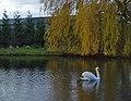 Mill Pond South Newbald.jpg