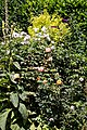 Mixed border at Nuthurst, West Sussex, England 2.jpg