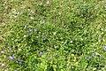 Mixed flora (Grubigstein) (24232067039).jpg