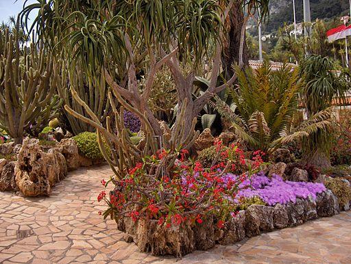 Monaco.Jardin exotique016