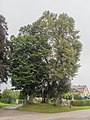Monheim Rehau 3 Linden mit Kreuz 002.jpg