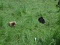 Moutons à Entrepierre-4.JPG