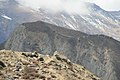 Mt.desert mustang.jpg