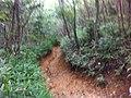 Muddy Trail on Otofukuyama - panoramio.jpg