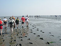 Mudflat hiking.JPG
