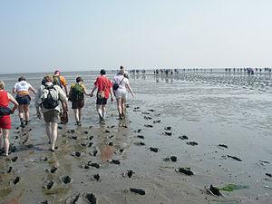 Mudflat hiking - Mudflat hiking in East Frisia, Germany