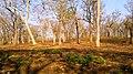 Mudumalai Tiger Reserve - panoramio (12).jpg