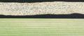Mycosphaerella graminicola 10.png