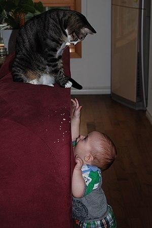 Myllissa-Oscar the tabby cat teasing a baby-01