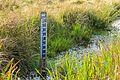 N.A.P. meetlat, om waterniveau in het gebied te meten. Locatie, natuurgebied Delleboersterheide – Catspoele 02.jpg