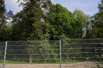 NSG 108c Vogelschutzgebiet CF9A9864.jpg