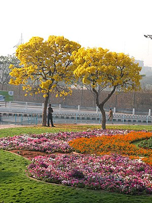 NTR Gardens - Blooming flowers at the gardens.