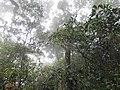 Na Hin Lat, Pak Phli District, Nakhon Nayok, Thailand - panoramio (5).jpg