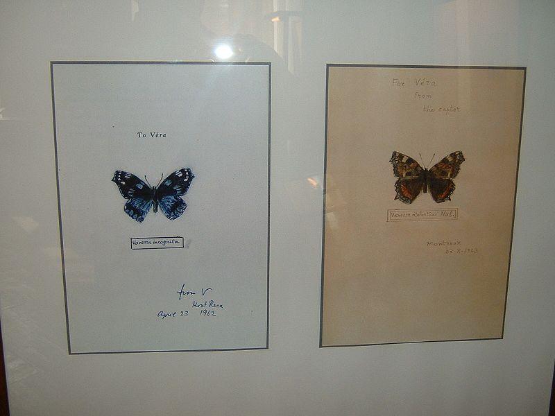 File:Nabokov Butterflies 2.JPG