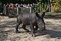 Nashornbaby 2W0T4598.jpg
