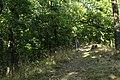 Natural monument Krásná stráň in 2014 (1).JPG