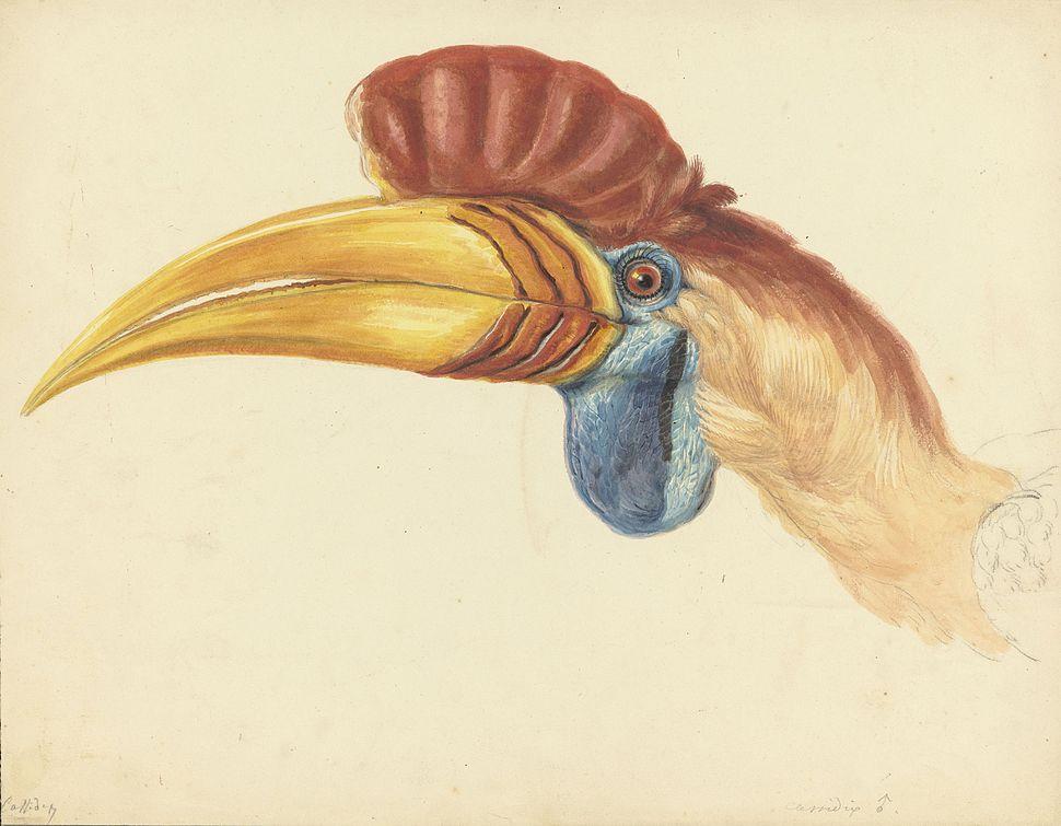 Naturalis Biodiversity Center - MMNAT01 AF NNM001000152 - Natuurkundige Commissie voor Nederlandsch-Indi%C3%AB - Bird species - Art