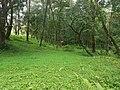 Nature 1440527689318091.jpg