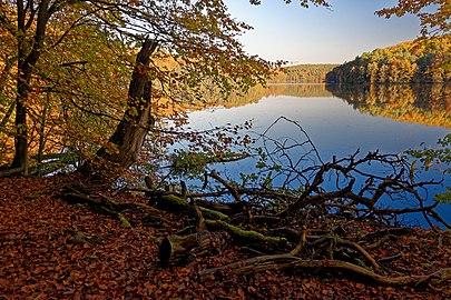 Naturpark Schlaubetal, Großer Treppelsee Westufer 2.jpg