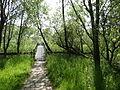 Naturschutzgebiet Heuckenlock 21.05.2014 Phase 63.JPG