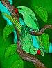 Rodrigues Parrot