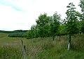 New Planting - geograph.org.uk - 476205.jpg