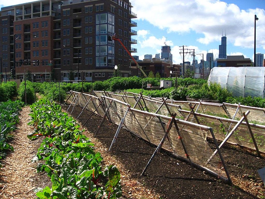 Blog Naturaleza educativa 1024px-New_crops-Chicago_urban_farm HISTORIA DEL HUERTO URBANO. UNA OPCIÓN SOSTENIBLE Y DE REGRESO A LA NATURALEZA