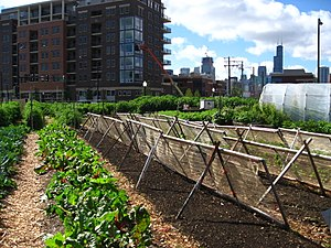 An urban farm in Chicago