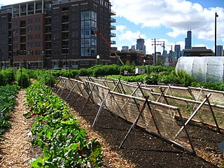 Urban agriculture The practice of cultivating, processing and distributing food in or around urban areas