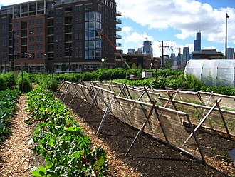 Urban agriculture - An urban farm in Chicago