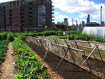Urban Districts Embrace Social >> Urban Agriculture Wikipedia