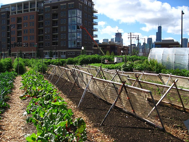 An urban farm in Chicago.