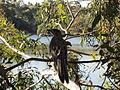 Newport lakes birdlife.jpg