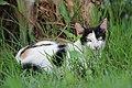 Nice Cat.jpg