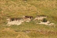 Terrain sableux et herbeux avec des trous à mi-pente