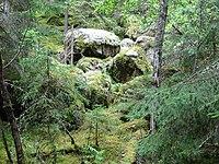 Norra Kvill National Park.jpg