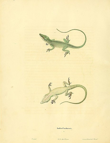 File:North American herpetology, or, A description of the reptiles inhabiting the United States (6046606274).jpg
