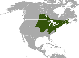 Northern Short-tailed Shrew area.png