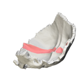 Occipital bone - Groove for transverse sinus - close-up7.png