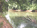 Ocmulgee River.jpg
