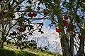 Okocho Yahata, Nankoku, Kochi Prefecture 783-0044, Japan - panoramio (2).jpg