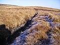On Brown Syke Moss - geograph.org.uk - 113964.jpg