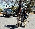 Operações com Cães (6110459804).jpg
