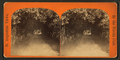 Orange archway on Mr. Ball's place, known as Lover's Lane, from Robert N. Dennis collection of stereoscopic views.png