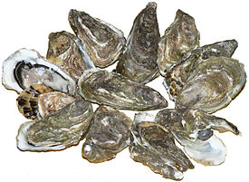 Pacific oysters 01.jpg
