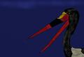 Palaeoephippiorhynchus edwardsi.png