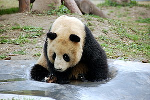 Shanghai Rush - In Changning, teams traveled to the Shanghai Zoo to search for the giant panda.